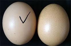 Photo of جعلی اور اصلی انڈے کی پہچان کیسے کریں؟