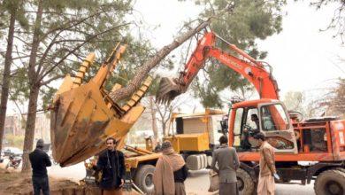 Photo of درخت کوایک جگہ سےدوسری جگہ منتقل کرنا اب نہایت آسان