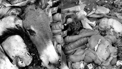 Photo of کچرا کنڈی سے 3 گدھوں کے سر اور آلاشیں برآمد
